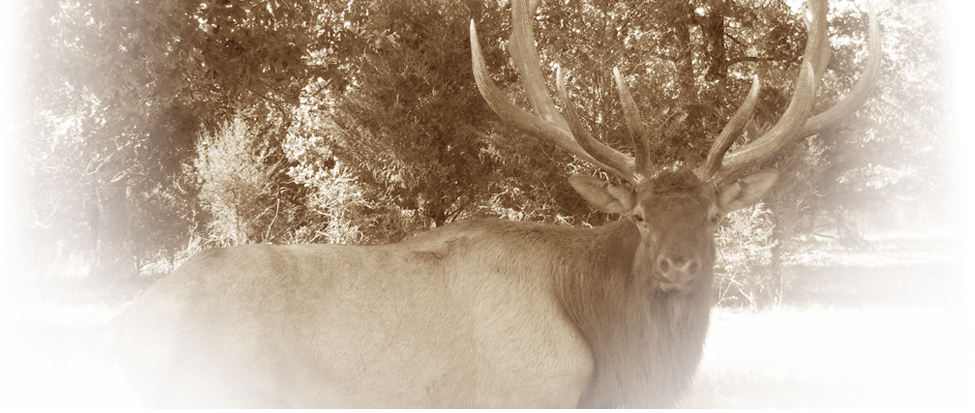 Stone Creek MO, provides exotic hunts and standard hunts such as wild hogs hunting, deer hunting, ram hunting, and elk hunting. We accommodate stand hunting, blind hunting, and still hunting